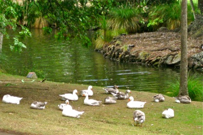 duck-pond-Auckland's Domain