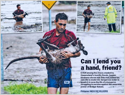 qld-flood-picture Man rescues Kangaroo